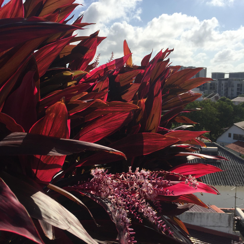 CNY2020 Flowers